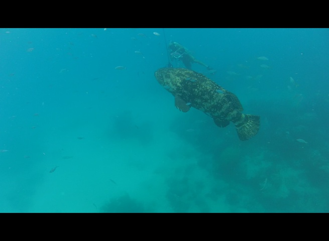 Don swimming alongside of a Goliath Grouper at Looe Key