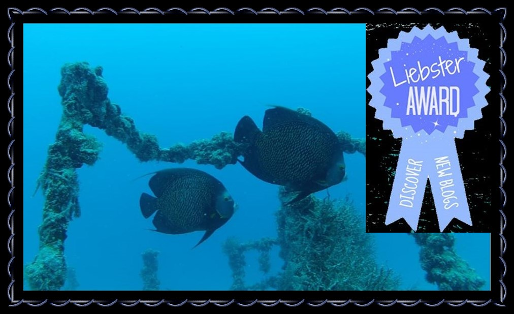 Liebster Award Diving