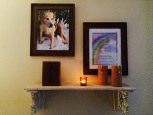 Here rests Chase, the most loving and loyal companion a person could ask for. April 27, 2002 - August 15, 2014